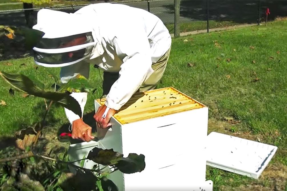 Dr. Steven Blanchard opens a beehive on the IUPUI campus.