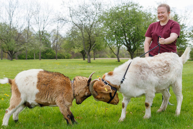 Shelby Lahne and her pet goats